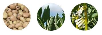 bobas bobik nasiona